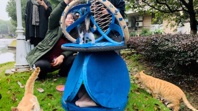 动物 | 冬季流浪动物窝 竟是用单车废旧车轮做的?