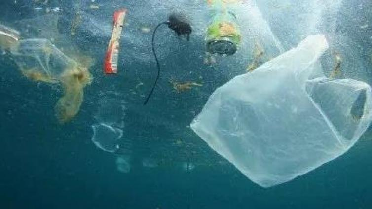 一次性塑料制品无法取缔?竟成为杀死海豚的凶器
