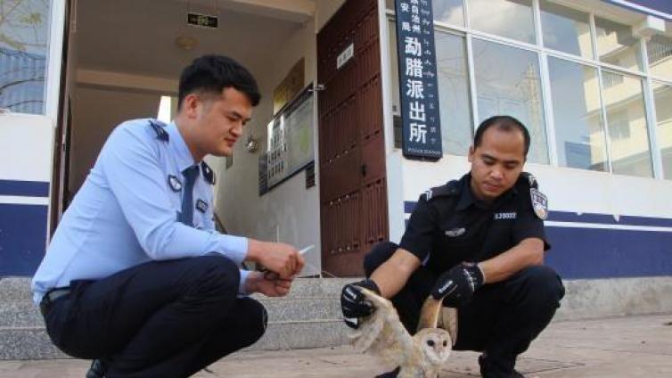 """爱心   """"有困难找警察"""" 二级保护动物猴面鹰被细线所困求助森警"""