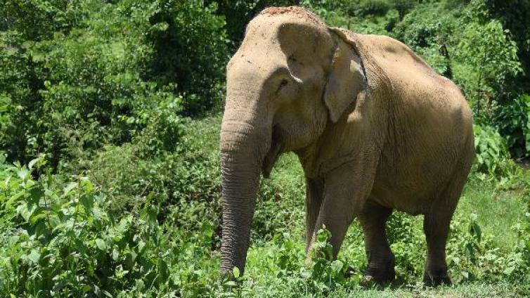 世界大象日:中国游客在泰国骑大象人数下降13%