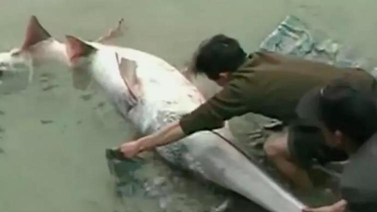 """""""水中大熊猫""""白鲟灭绝,长江鱼类生存告急"""