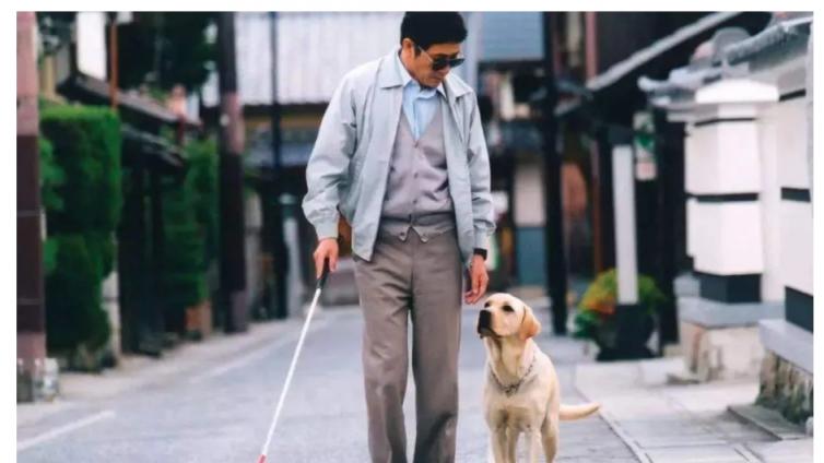 上海退役4年导盲犬苦等领养,全国200余只导盲犬何以为家?