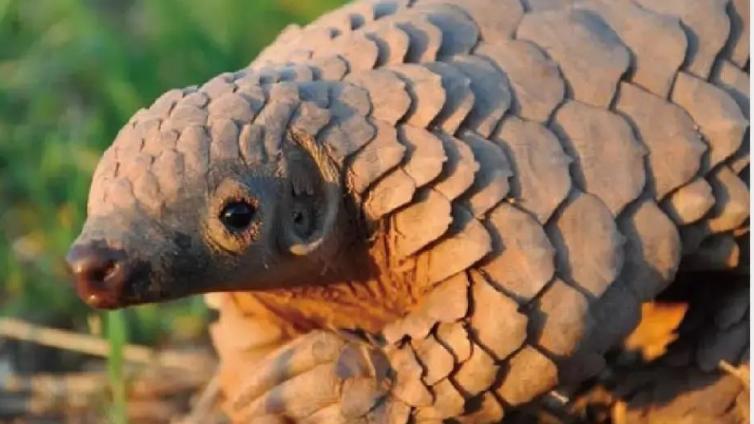 新冠疫情之痛,能促使我国在野生动物保护上向前走一步吗?  公共参与