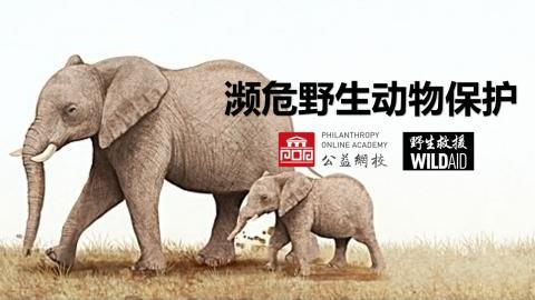 濒危野生动物保护